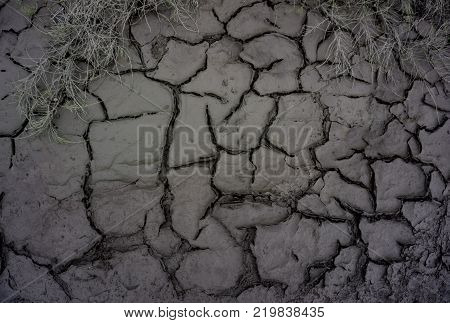 The ground with herbs and cracked earth.