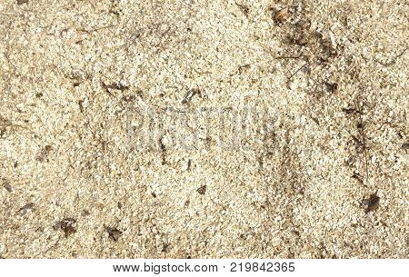 in a dark color Wood sawdust texture material background closeup top view