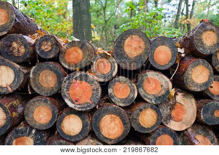 Pile of tree trunks in the Speulder forest Netherlands.
