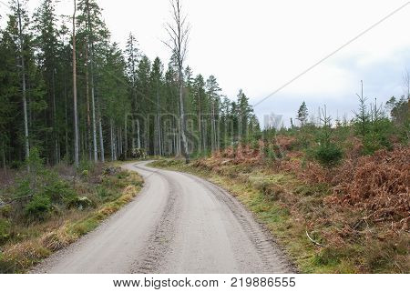 Fall season with a winding gravel road through a conoferous forest