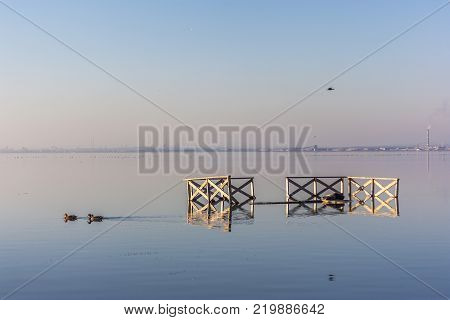 a flock of ducks swim in a lake on a blue sky background. a pleasant soft light coming from the setting or rising sun. wild ducks have fun in lukewarm waters.