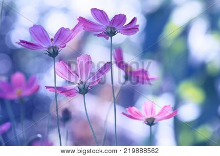 Delicate wild flowers of a purple color on a beautiful background