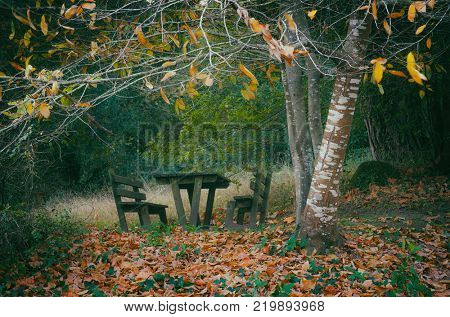 Empty wooden picnic table and benches in the woods in the Fall
