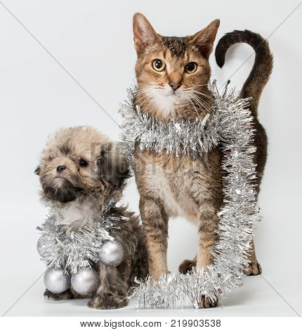 Cat and the puppy in studio on a neutral background with New Year's decorations