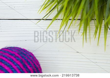 Pet care, veterinary, grooming concept. Pets having fun. A white wooden background with a pet toy rope ball and green plant. Space for your text or image.
