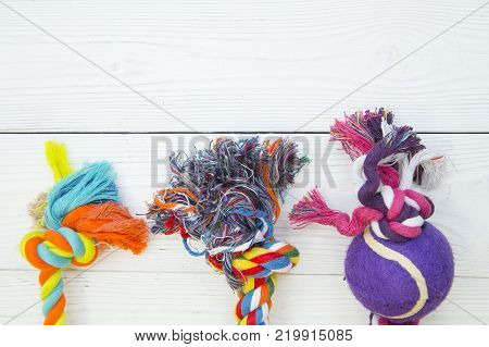Pet care, veterinary, grooming concept. Pets having fun. A white wooden background with colorful textile pet toys. Space for your text or image.