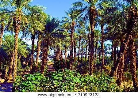 Desert Oasis with chaparral shrubs and Date Palms taken in a Zen Meditation Garden