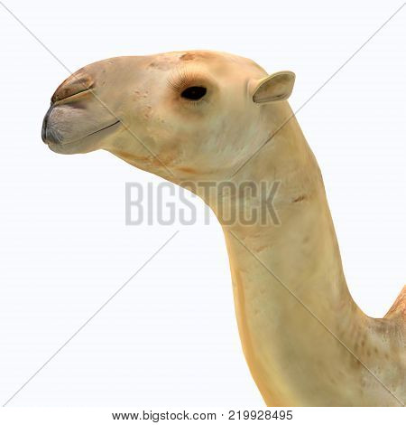 Camelops hesternus Head 3D illustration - Camelops was a camel-type herbivorous animal that lived in North America during the Pleistocene Period.