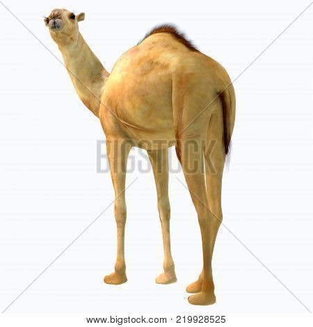 Camelops hesternus Tail 3D illustration - Camelops was a camel-type herbivorous animal that lived in North America during the Pleistocene Period.