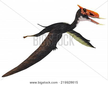 Dsungaripterus Flying Reptile 3D illustration - This carnivorous pterosaur lived in China in the Cretaceous Period and preyed on shellfish.
