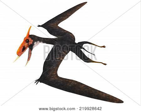 Dsungaripterus Reptile Side Profile 3D illustration - This carnivorous pterosaur lived in China in the Cretaceous Period and preyed on shellfish.