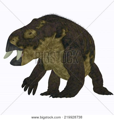 Placerias Dinosaur on White 3D illustration - Placerias was a herbivorous dicynodont dinosaur that lived in Arizona, USA in the Triassic Period.