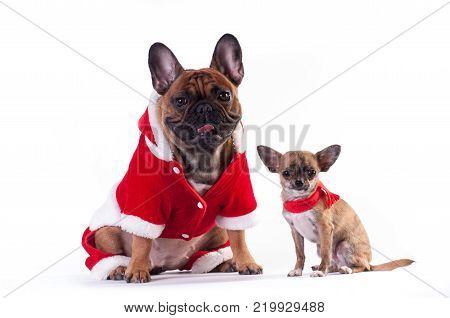 Funny French Bulldog In Green Elf Suit