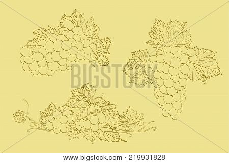 three clusters of grapes on a light background