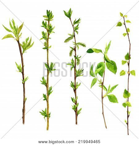 watercolor wood twigs with green leaves, isolated hand drawn nature objects, spring tree branches, sticks, hand drawn illustration