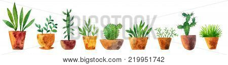 watercolor drawing house plants, cacti and succulents, hand drawn illustration