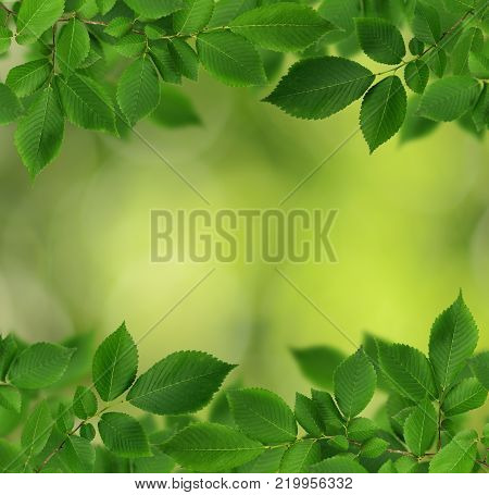 Borders with fresh green elm-tree leaves on green bokeh background.