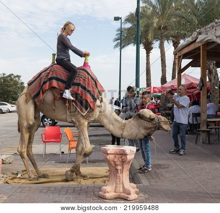 Yeriho, Israel, November 25, 2017 : The camel's driver rolls a visitor on a camel in Yeriho in Israel