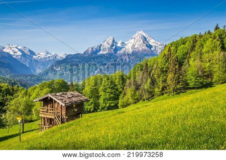 Beautiful view of idyllic mountain scenery in the Alps with fresh green mountain pastures with flowers and old traditional mountain lodge in springtime
