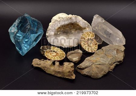 Fossils and gems, including brachiopods, crinoids, nautilus, and a geode, arranged on a seamless black background.