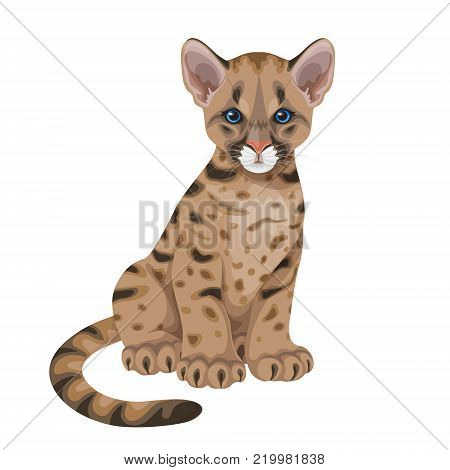 Little spotted puma  with blue eyes.Young American mountain lion isolated on white. Cougar cub vector flat illustration.