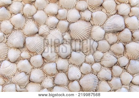 House wall made of sea shell like background decoration texture
