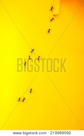 Some Ants on a yellow garbage bin