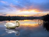 final bow beauty time great sunset pogoria lake poster