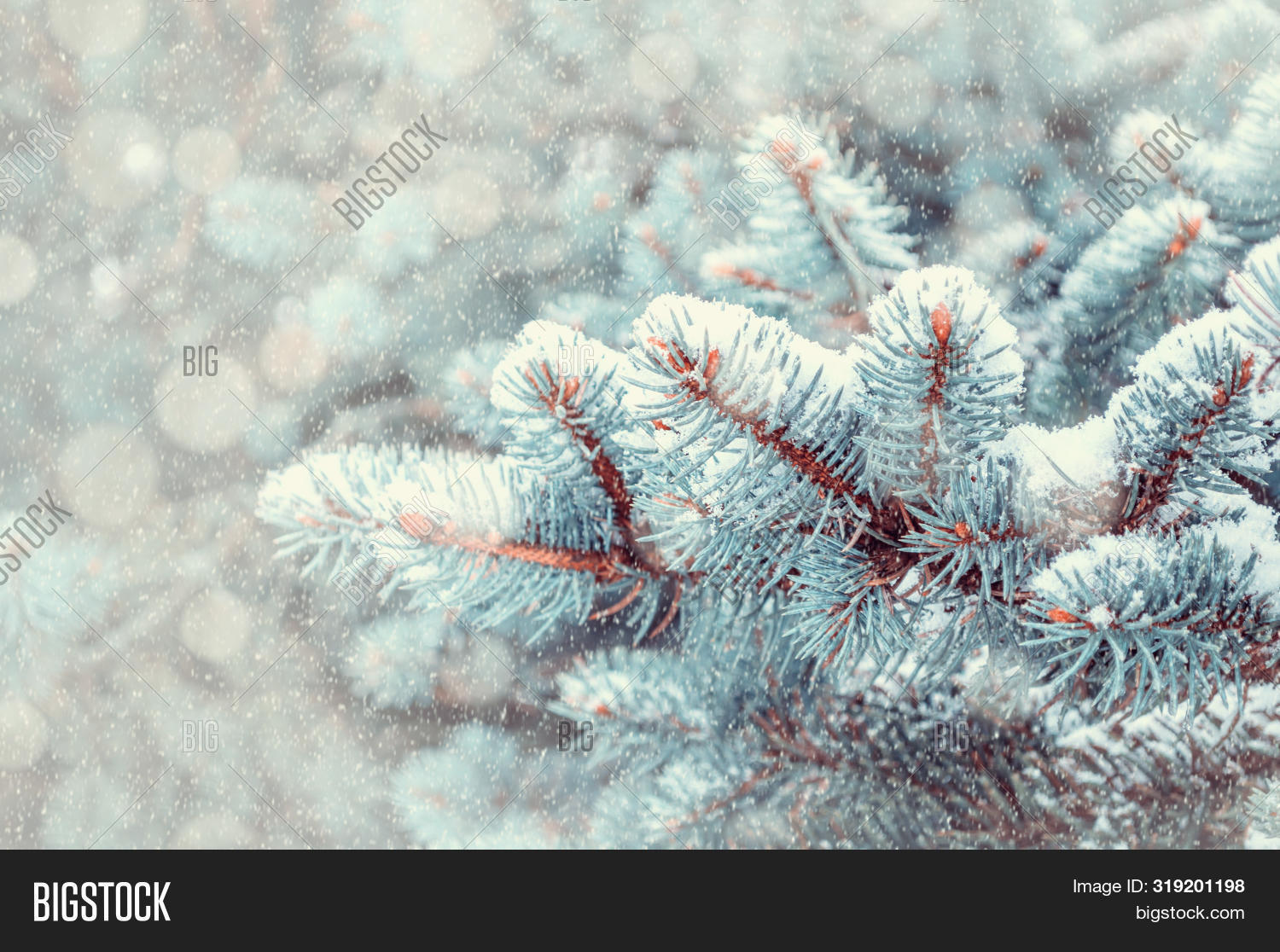 Winter Christmas landscape. Shallow DOF. Blue pine tree branches under winter snowfall, closeup of winter forest nature, free space for text, vintage tones applied