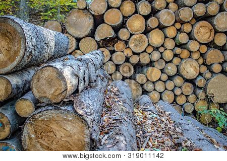 Forestry Stacked Tree Trunks, Oak, Beech, In The Autumn Forest Of The Ore Mountains In Saxony German