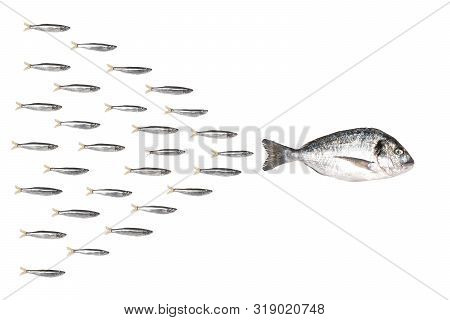 Fishes In Group Leadership Concept. Little Fish Folow The Leader.