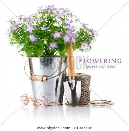 flowers in bucket with garden tools isolated on white background