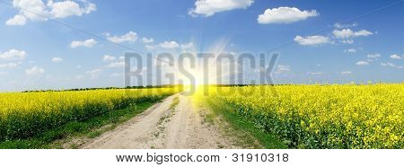 Golden Field Of Rapeseeds And The Blue Sky With Clouds.
