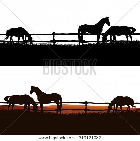 Herd Of Domestic Horses Grazing In The Field Behind Wooden Fence - Animal Farm Vector Silhouette Out