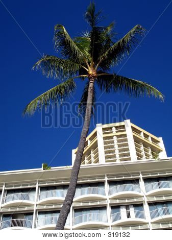 Palm Tree And Building