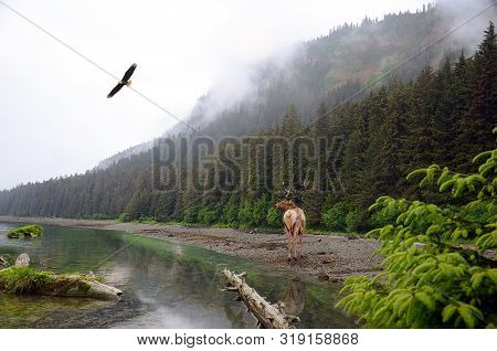 Mystical Forest Landscape Of Mountains. Picturesque Lake And Flying Eagle.