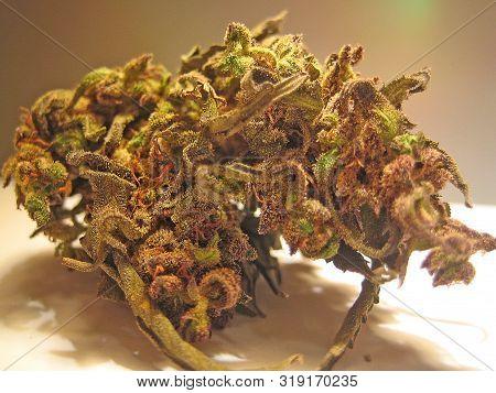 Cannabis medical bio cretan purple haze macro vintage old school feelings shoots poster