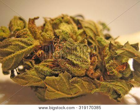 Cannabis Medical Bio Cretan Purple Haze Macro Vintage Old School Feelings Shoots