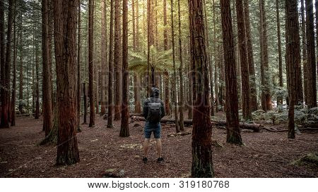 Young Male Traveler Wearing Hoodie Standing Alone Looking Up In Redwood Forest Near Rotorua City (wh