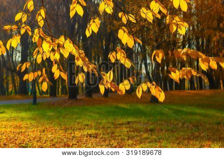 Fall background - yellowed fall tree branches with golden fall foliage on the background of city fall park alley in sunny fall evening. Picturesque park fall scene