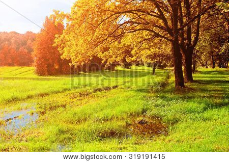 Autumn October landscape. Golden park autumn trees and flooded lawn in the autumn park in sunny autumn weather. Colorful autumn nature scene