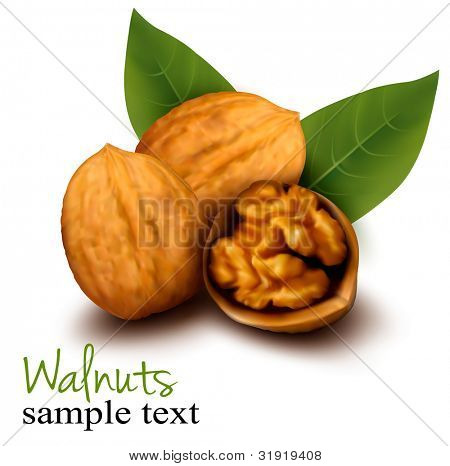 Walnuts and a cracked walnut. Vector illustration.