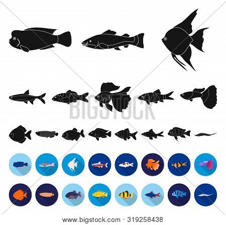 Different Types Of Fish Black, Flat Icons In Set Collection For Design. Marine And Aquarium Fish Bit