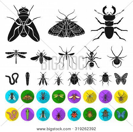 Different Kinds Of Insects Black, Flat Icons In Set Collection For Design. Insect Arthropod Bitmap S