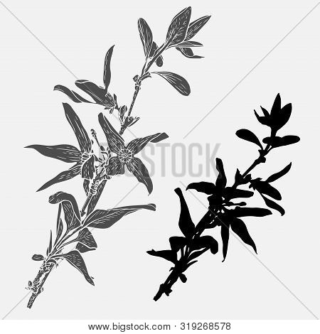 Forsythia Flowers On A Branch. Vector Design In Black And White Style. Elements Isolated On Backgrou