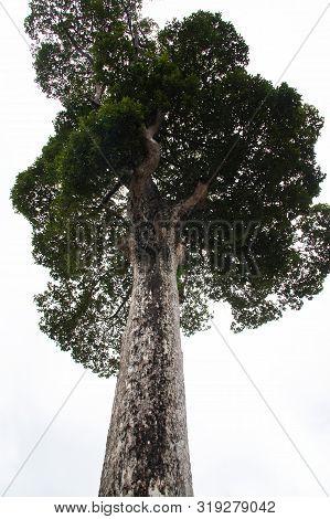 Big Trees, Many Decades Old, Provide Shade