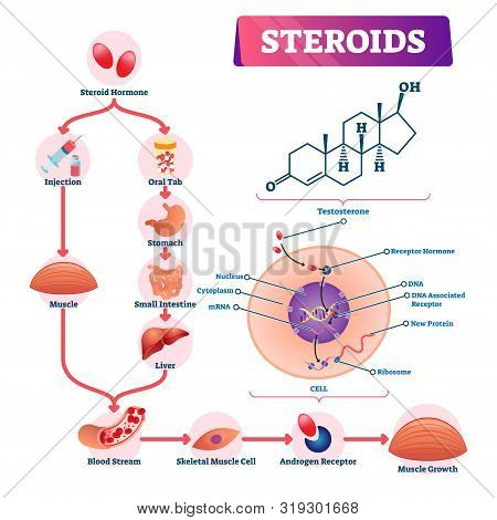 Steroids Vector Illustration. Labeled Strength Hormone Explanation Scheme. Diagram With Injection Or