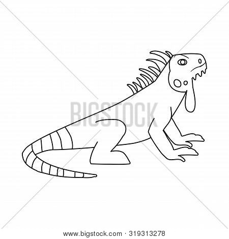 Vector Illustration Of Iguana And Lizard Sign. Collection Of Iguana And Colorful Vector Icon For Sto
