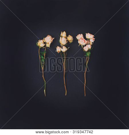 Floral Vintage Card With Flowers. White Pink Dry Roses Bouquet On Dark Black Background. Template Fo