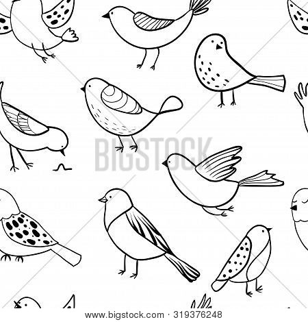 Bird Seamless Pattern. Background With Cute Hand Drawn Bird Doodles. Black On White Vector . Backgro